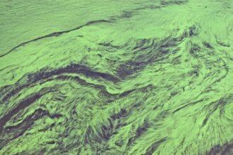 Algal bloom, Ukraine. Credit: Universal Images Group via Getty Images