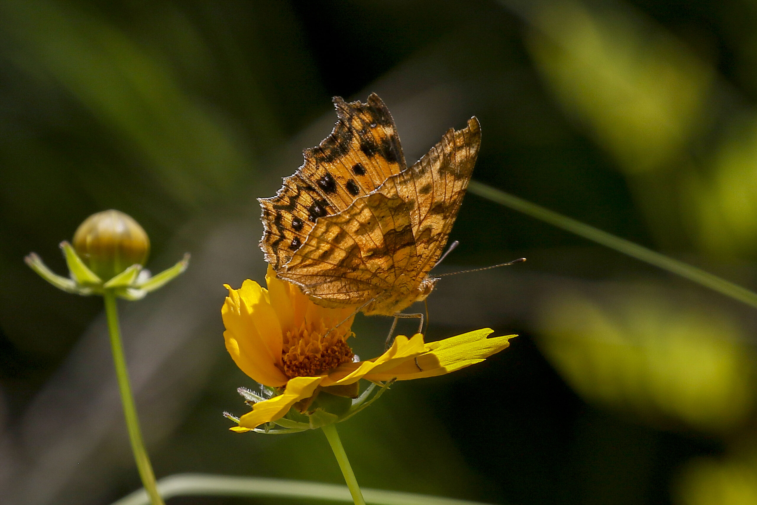 Warming Trends: A Song for the Planet, Secrets of Hempcrete and Butterfly Snapshots