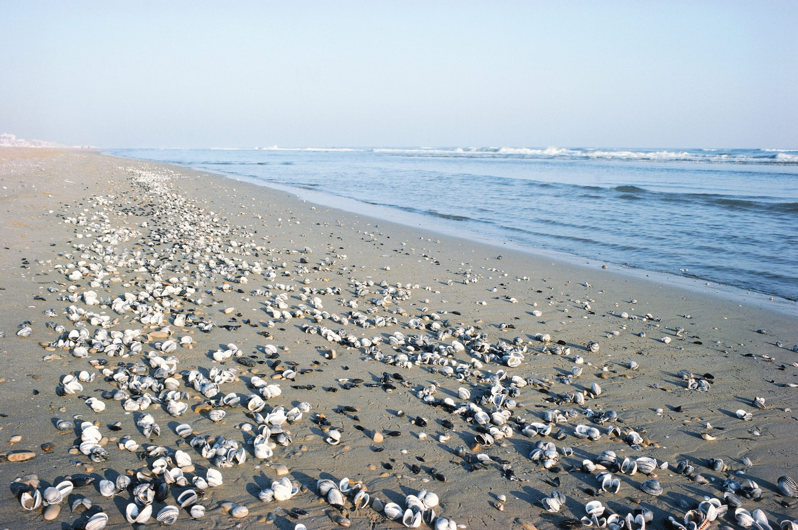 Shells on Riccione beach after a storm in Emilia-Romagna, Italy. Credit: DeAgostini/Getty Images
