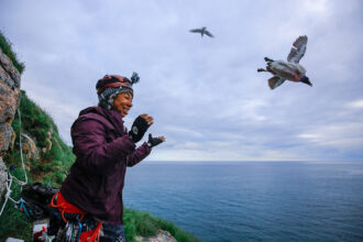 Emily Choy releases a thick-billed murre after measuring its physiological response to heat on Coats Island, Nunavut, Canada. Credit: Douglas Noblet