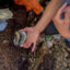 Wendy Bragg, a marine ecologist and doctoral student at the University of California, Santa Cruz, holds a black abalone just before it's resettled along the Big Sur coast. , Credit: Anne Marshall-Chalmers
