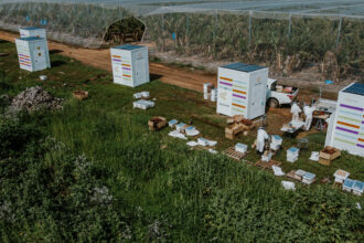 Beewise's Beehome is a high-tech beehive that helps beekeepers remotely monitor and care for their bees. Credit: Beewise