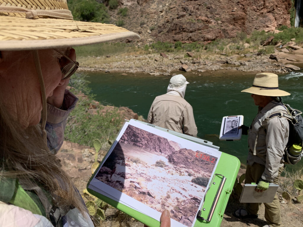 Researcher Helen C. Fairley and her field team this spring compared changes in vegetation and the beach below Deer Creek Falls with historic photos of the same spot. Fairley has been studying changes in the Grand Canyon for decades. She's noticed shriveled cacti and Bighorn sheep gathering especially early on the riverbanks this year. Both indicate another dry year in the Colorado River Basin as climate change warms the Southwest. Credit: Judy Fahys/Inside Climate News