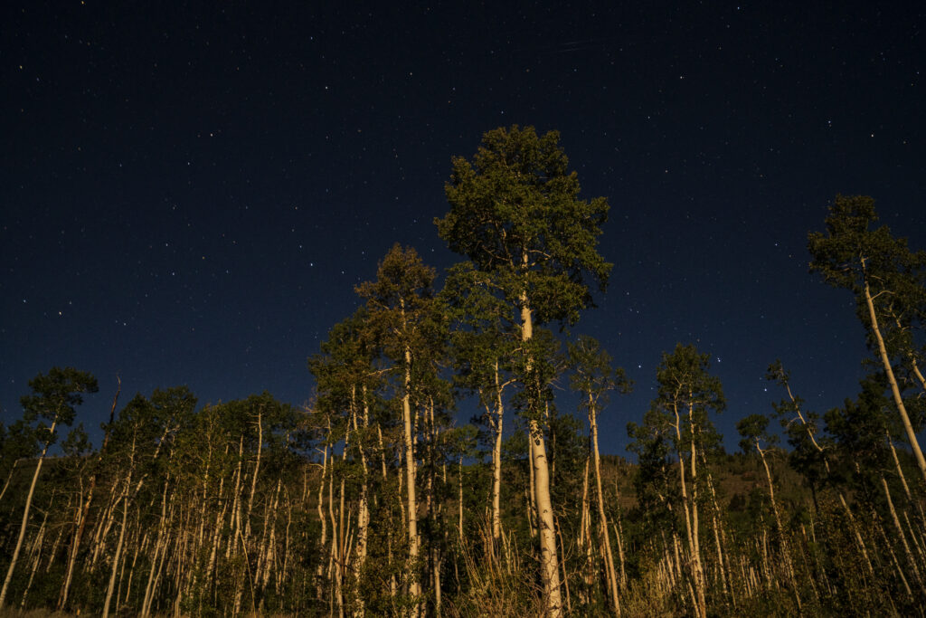 Aspen trees that are part of Pando are seen at night. Credit: Lance Oditt / Studio 47.60 North / friendsofpando.org
