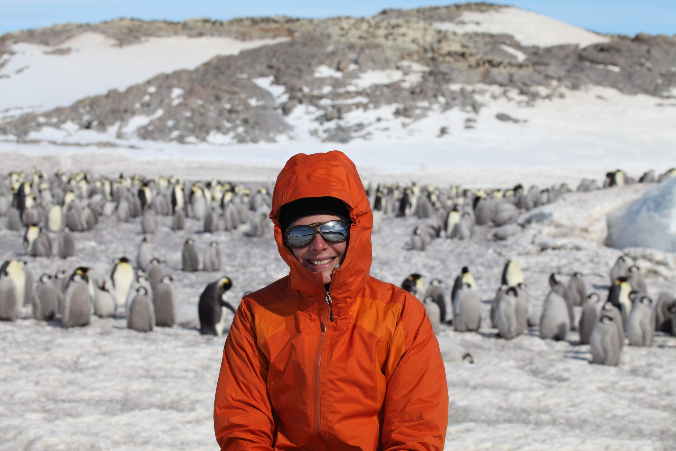 Stephanie Jenouvrier has been studying emperor penguins for decades. Her latest paper shows that the birds face a dire future if greenhouse gas emissions continue to be emitted at current rates. Photo Courtesy of Stephanie Jenouvrier © Woods Hole Oceanographic Institution