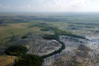 Transition from Sawgrass to coastal habitat in Everglades National Park. Credit: National Park Service