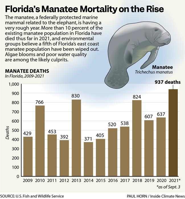 Florida's Manatee Mortality on the Rise