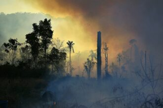 Smoke rises from an illegally lit fire in a section of Amazon rainforest, south of Novo Progresso in Para state, Brazil, on Aug. 15, 2020. Credit: Carl De Souza/AFP via Getty Images