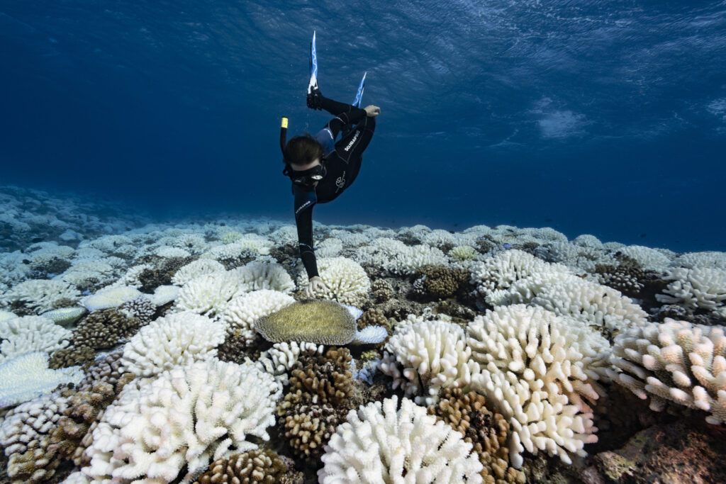 Big Reefs in Big Trouble: New Research Tracks a 50 Percent Decline in Living Coral Since the 1950s