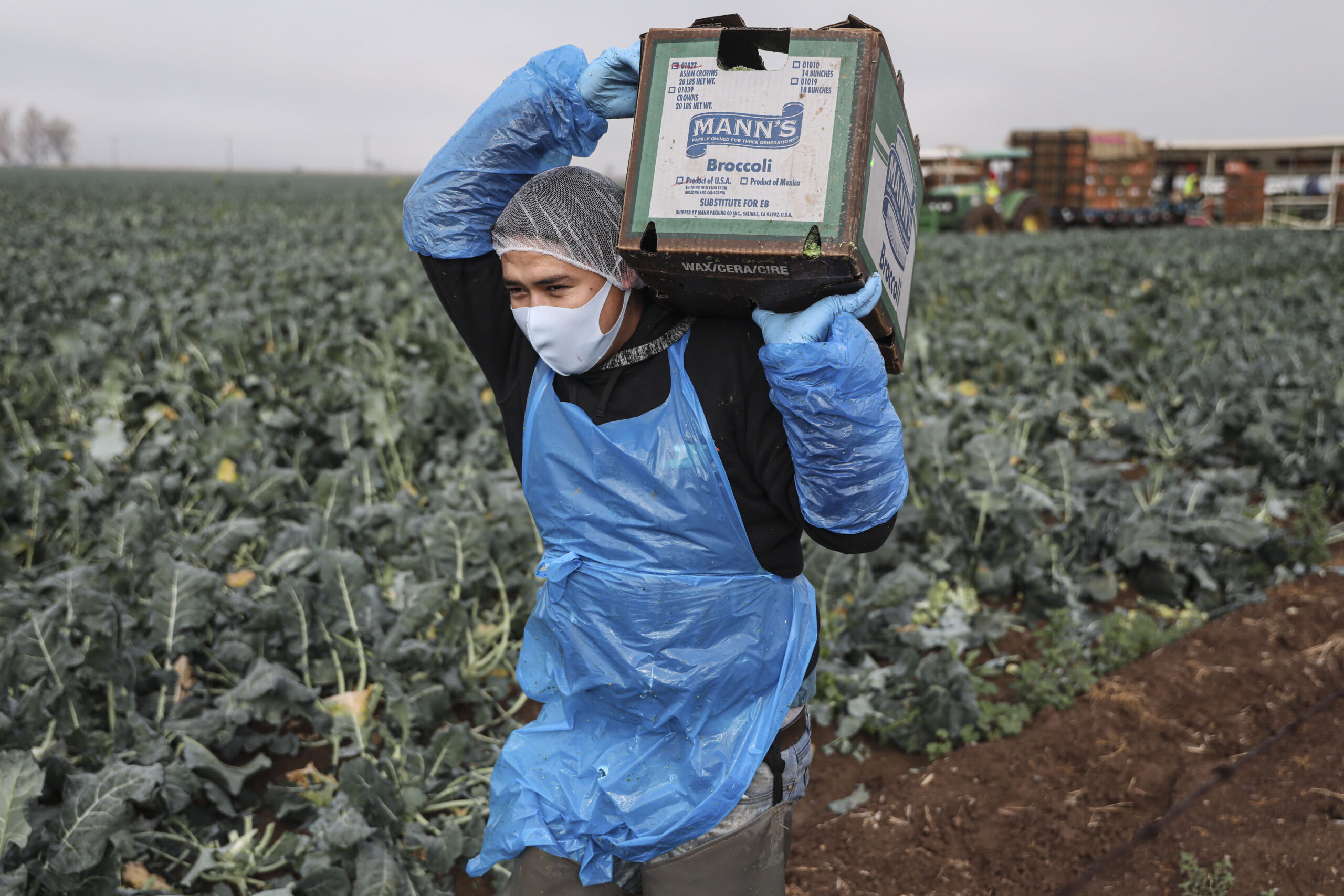 A farmworker carries a box of broccoli in a field on Jan. 22, 2021 in Calexico, California. Credit: Sandy Huffaker/Getty Images