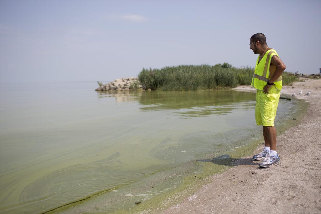 Horacio Romero of Toledo, Ohio looks at algae in Lake Erie at Maumee Bay State Park Aug. 4, 2014 in Oregon, Ohio. Credit: Aaron P. Bernstein/Getty Images
