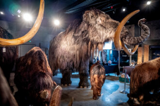 A woolly mammoth family on March 5, 2019 in Billingshurst, England. Credit: Andrew Hasson/Getty Images